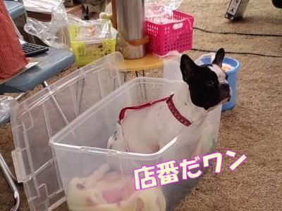 11_2_20_7.jpg