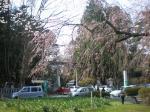 公園から見た神社の鳥居