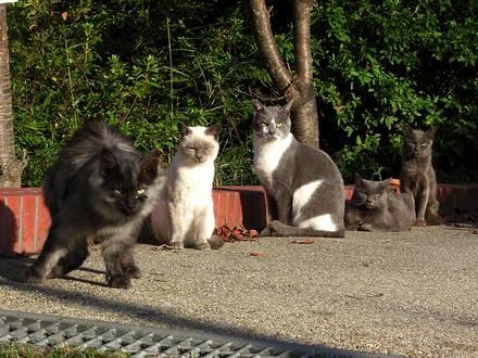 公園の猫達