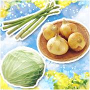 らでぃっしゅぼうや春野菜