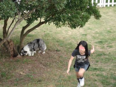 037(Dog run)