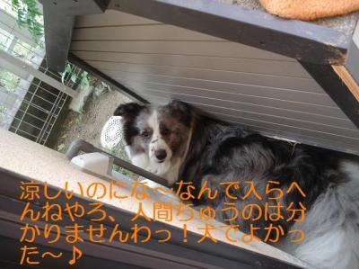 犬でよかった~♪