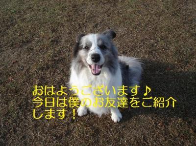 お友達紹介♪