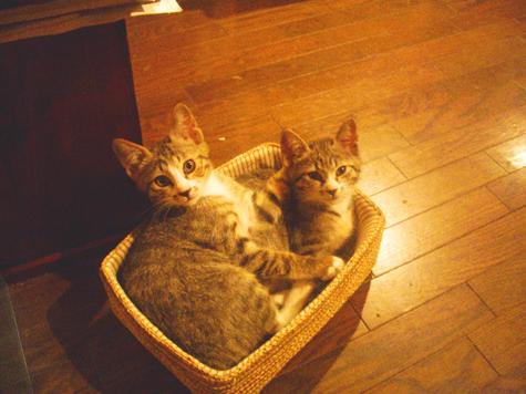 ブログ猫4