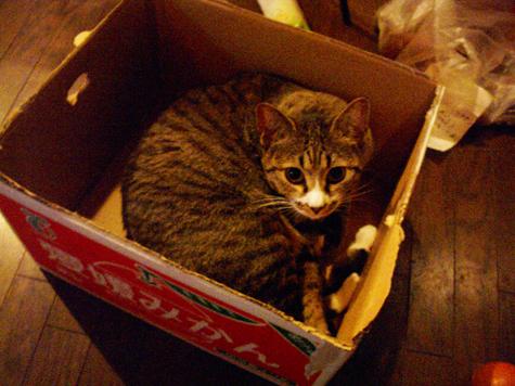 ブログ猫1