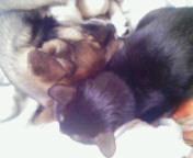 仲良く眠る二匹