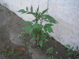 DSCF0121_convert_20100605055138.jpg
