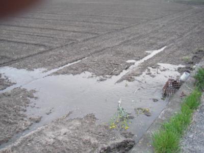 田んぼに入水