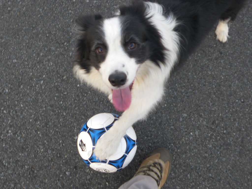 サッカーしようよ~