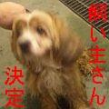 コッカ−くんs