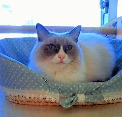 普通の猫なら普通のことですけどね・・・・。