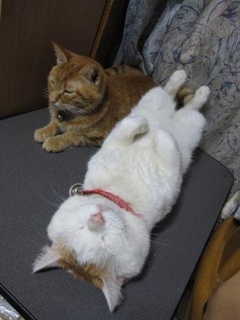 おいしそうな脚の女子校生 234脚目猫ガイジ隔離スレ [無断転載禁止]©bbspink.comYouTube動画>1本 ->画像>4474枚