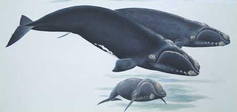 whale_illust.jpg