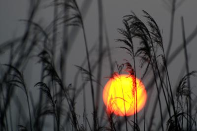 福島潟夕陽 YS0_5560