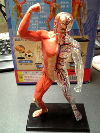人体P01