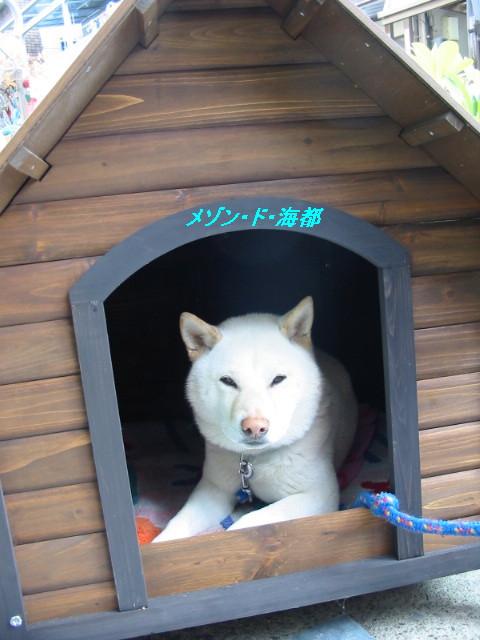 kaitohouse.jpg