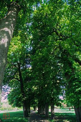 Ruskin Park