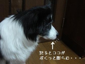 DSC05746ka.jpg