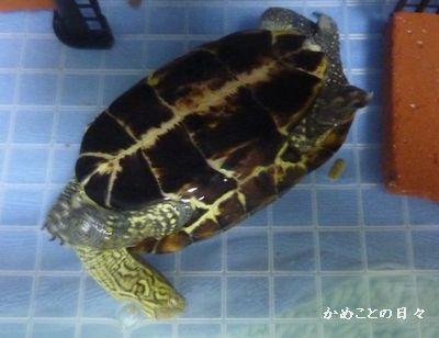 P1150255-suke.jpg