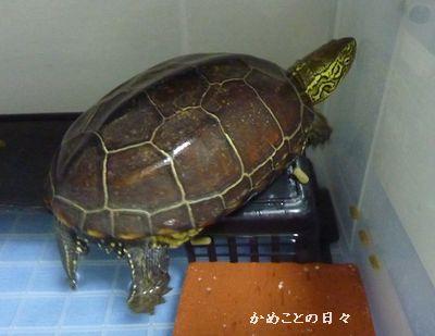 P1150256-suke.jpg