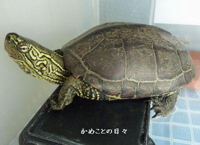 P1150351-suke.jpg