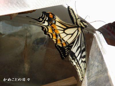 P1150497-fly.jpg