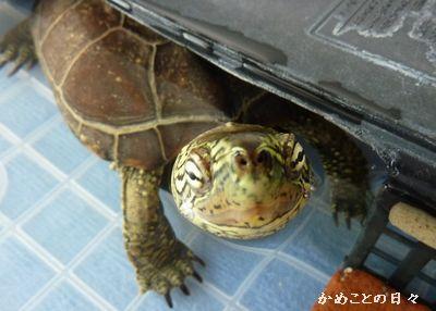 P1160505-suke.jpg