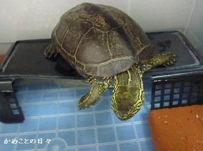P1170855-suke.jpg