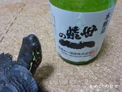 P1180802-sake.jpg
