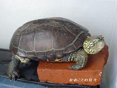 P1190060-suke.jpg