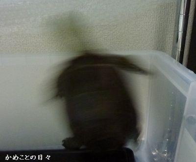 P1210001-suke.jpg
