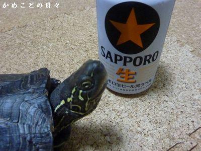 P1210938-beer.jpg