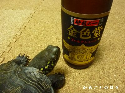 P1220889-beer.jpg