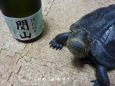 P1230852-sake.jpg