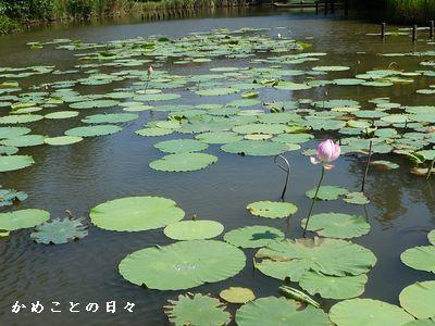P1590343-park.jpg