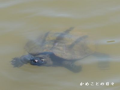P1590359-kuro.jpg