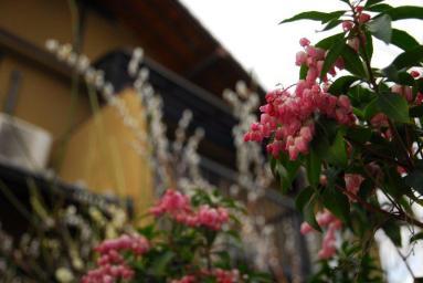 春やねえ~