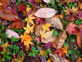 枯葉と新しい命