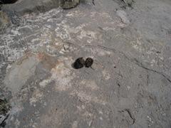 地獄谷サル糞