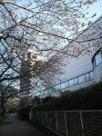 20090323sakura