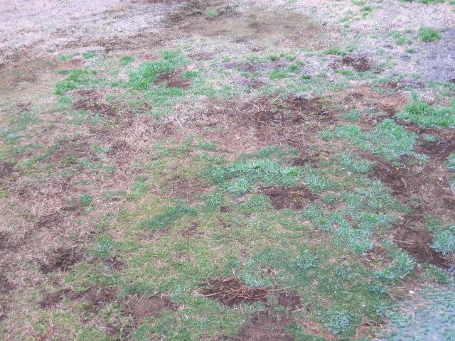 芝生の水たまり