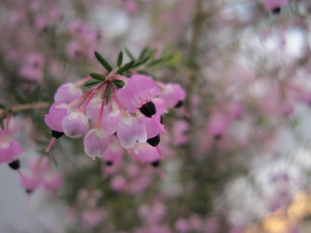 何かは分からないけど近所で咲いてた花
