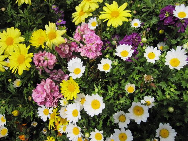 いろんな花をみていた