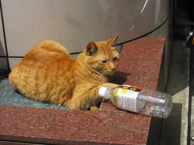 ペットボトルとネコ