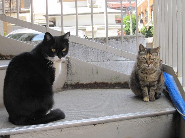 百人町のネコたち