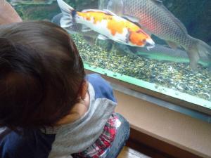 初めての水族館2