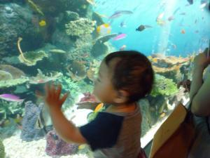 初めての水族館3