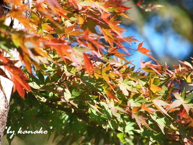 2009年秋の庭
