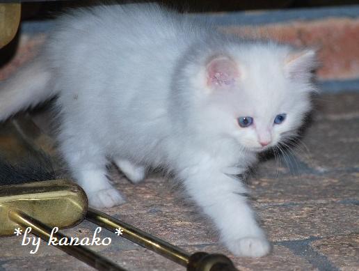 2010年1月4日・ココ10
