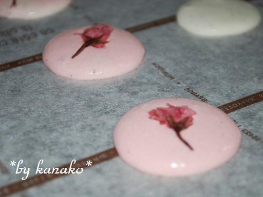 ●●桜のマカロン1